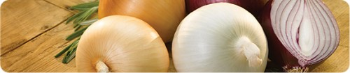 crop_banner-all-about-onions